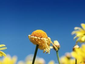 Test flower