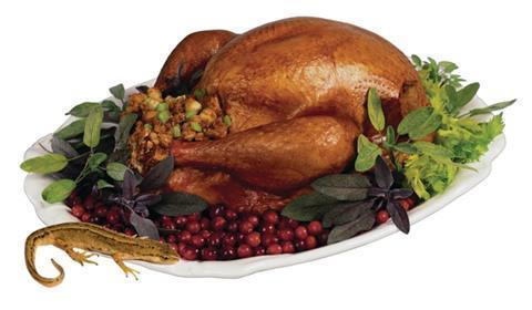 /c/a/d/Thanksgiving_Turkey_.jpg